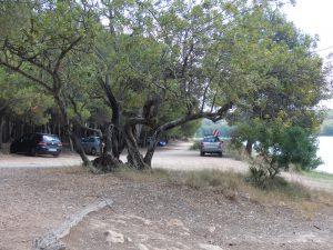 Natuurgebied-Ribesalves