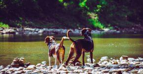 Hondenstrandjes-Castellon